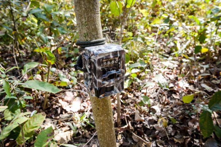 Camera traps.jpg